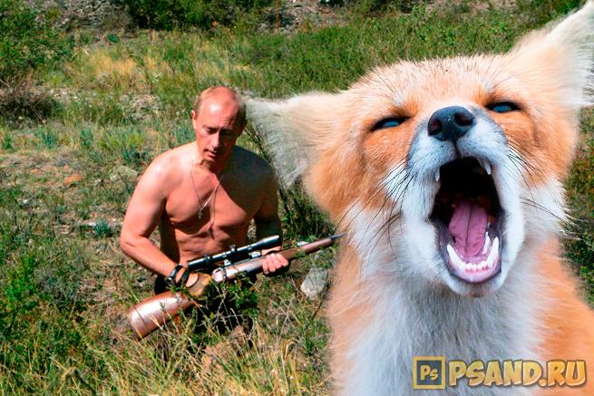 Лиса-испугалась-Путина