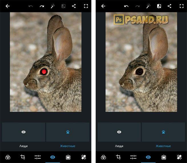 Удаление красных глаз у животных Photoshop Express